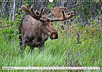 Tierwelt in den Canadian Rockies (Wandkalender 2019 DIN A3 quer) - Produktdetailbild 9