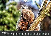 Tierwelten Extrem - Spektakuläre Tierfotos (Wandkalender 2019 DIN A4 quer) - Produktdetailbild 1