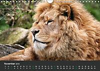 Tierwelten Extrem - Spektakuläre Tierfotos (Wandkalender 2019 DIN A4 quer) - Produktdetailbild 11