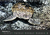 Tierwelten Extrem - Spektakuläre Tierfotos (Wandkalender 2019 DIN A4 quer) - Produktdetailbild 9