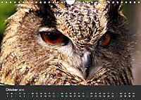 Tierwelten Extrem - Spektakuläre Tierfotos (Wandkalender 2019 DIN A4 quer) - Produktdetailbild 10