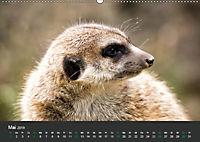 Tierwelten Extrem - Spektakuläre Tierfotos (Wandkalender 2019 DIN A2 quer) - Produktdetailbild 5