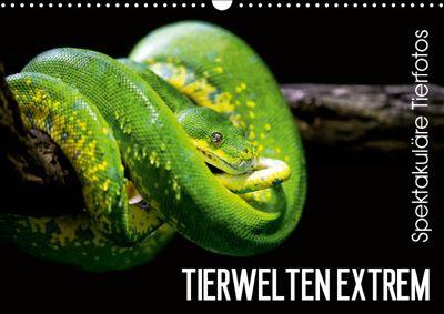 Tierwelten Extrem - Spektakuläre Tierfotos (Wandkalender 2019 DIN A3 quer), Christian Colista