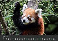 Tierwelten Extrem - Spektakuläre Tierfotos (Wandkalender 2019 DIN A3 quer) - Produktdetailbild 4