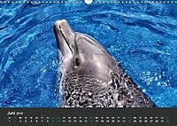 Tierwelten Extrem - Spektakuläre Tierfotos (Wandkalender 2019 DIN A3 quer) - Produktdetailbild 6