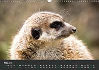 Tierwelten Extrem - Spektakuläre Tierfotos (Wandkalender 2019 DIN A3 quer) - Produktdetailbild 5