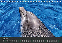 Tierwelten Extrem - Spektakuläre Tierfotos (Tischkalender 2019 DIN A5 quer) - Produktdetailbild 6