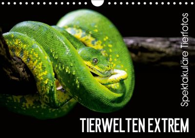 Tierwelten Extrem - Spektakuläre Tierfotos (Wandkalender 2019 DIN A4 quer), Christian Colista