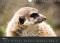Tierwelten Extrem - Spektakuläre Tierfotos (Wandkalender 2019 DIN A4 quer) - Produktdetailbild 5