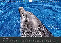 Tierwelten Extrem - Spektakuläre Tierfotos (Wandkalender 2019 DIN A4 quer) - Produktdetailbild 6