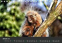 Tierwelten Extrem - Spektakuläre Tierfotos (Tischkalender 2019 DIN A5 quer) - Produktdetailbild 1