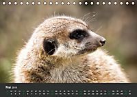 Tierwelten Extrem - Spektakuläre Tierfotos (Tischkalender 2019 DIN A5 quer) - Produktdetailbild 5