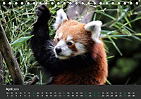 Tierwelten Extrem - Spektakuläre Tierfotos (Tischkalender 2019 DIN A5 quer) - Produktdetailbild 4
