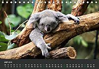 Tierwelten Extrem - Spektakuläre Tierfotos (Tischkalender 2019 DIN A5 quer) - Produktdetailbild 7