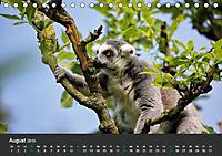 Tierwelten Extrem - Spektakuläre Tierfotos (Tischkalender 2019 DIN A5 quer) - Produktdetailbild 8