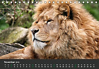 Tierwelten Extrem - Spektakuläre Tierfotos (Tischkalender 2019 DIN A5 quer) - Produktdetailbild 11
