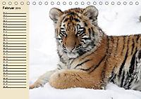Tiger. Gestreift, wild und schön (Tischkalender 2019 DIN A5 quer) - Produktdetailbild 2