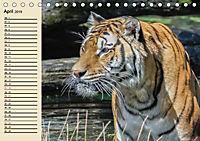 Tiger. Gestreift, wild und schön (Tischkalender 2019 DIN A5 quer) - Produktdetailbild 4