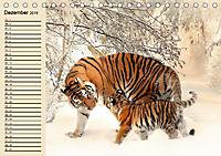 Tiger. Gestreift, wild und schön (Tischkalender 2019 DIN A5 quer) - Produktdetailbild 12
