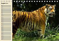 Tiger. Gestreift, wild und schön (Tischkalender 2019 DIN A5 quer) - Produktdetailbild 8