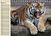 Tiger. Gestreift, wild und schön (Tischkalender 2019 DIN A5 quer) - Produktdetailbild 3