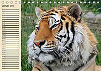Tiger. Gestreift, wild und schön (Tischkalender 2019 DIN A5 quer) - Produktdetailbild 1