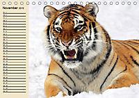 Tiger. Gestreift, wild und schön (Tischkalender 2019 DIN A5 quer) - Produktdetailbild 11