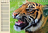 Tiger. Gestreift, wild und schön (Tischkalender 2019 DIN A5 quer) - Produktdetailbild 9