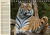Tiger. Gestreift, wild und schön (Tischkalender 2019 DIN A5 quer) - Produktdetailbild 10