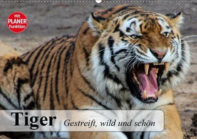 Tiger. Gestreift, wild und schön (Wandkalender 2019 DIN A2 quer), Elisabeth Stanzer
