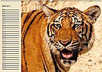 Tiger. Gestreift, wild und schön (Wandkalender 2019 DIN A2 quer) - Produktdetailbild 7