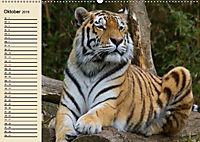 Tiger. Gestreift, wild und schön (Wandkalender 2019 DIN A2 quer) - Produktdetailbild 10