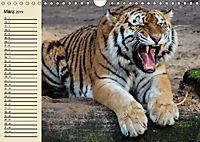 Tiger. Gestreift, wild und schön (Wandkalender 2019 DIN A4 quer) - Produktdetailbild 3
