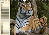 Tiger. Gestreift, wild und schön (Wandkalender 2019 DIN A4 quer) - Produktdetailbild 10