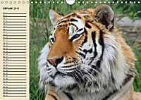 Tiger. Gestreift, wild und schön (Wandkalender 2019 DIN A4 quer) - Produktdetailbild 1