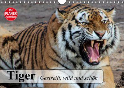 Tiger. Gestreift, wild und schön (Wandkalender 2019 DIN A4 quer), Elisabeth Stanzer