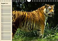 Tiger. Gestreift, wild und schön (Wandkalender 2019 DIN A4 quer) - Produktdetailbild 8