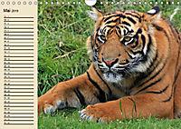 Tiger. Gestreift, wild und schön (Wandkalender 2019 DIN A4 quer) - Produktdetailbild 5