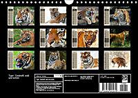 Tiger. Gestreift, wild und schön (Wandkalender 2019 DIN A4 quer) - Produktdetailbild 13