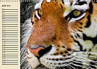 Tiger. Gestreift, wild und schön (Wandkalender 2019 DIN A3 quer) - Produktdetailbild 6