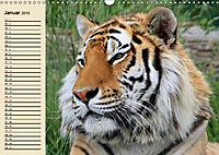 Tiger. Gestreift, wild und schön (Wandkalender 2019 DIN A3 quer) - Produktdetailbild 1