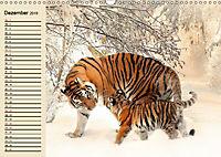 Tiger. Gestreift, wild und schön (Wandkalender 2019 DIN A3 quer) - Produktdetailbild 12