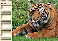 Tiger. Gestreift, wild und schön (Wandkalender 2019 DIN A2 quer) - Produktdetailbild 5
