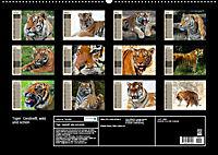 Tiger. Gestreift, wild und schön (Wandkalender 2019 DIN A2 quer) - Produktdetailbild 13