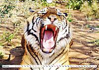 TIGER IMPRESSIONEN Gestreifte Seltenheit auf unserer Erde (Wandkalender 2019 DIN A4 quer) - Produktdetailbild 6