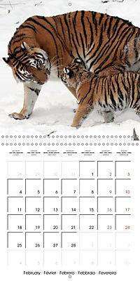 Tiger - The Beautiful Predator (Wall Calendar 2019 300 × 300 mm Square) - Produktdetailbild 2