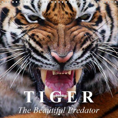 Tiger - The Beautiful Predator (Wall Calendar 2019 300 × 300 mm Square), Elisabeth Stanzer