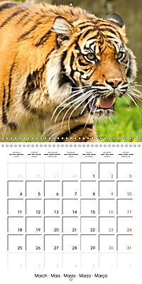 Tiger - The Beautiful Predator (Wall Calendar 2019 300 × 300 mm Square) - Produktdetailbild 3