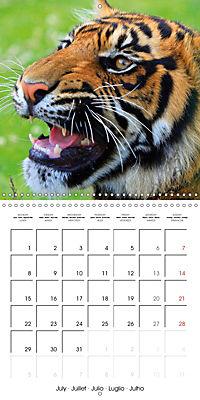 Tiger - The Beautiful Predator (Wall Calendar 2019 300 × 300 mm Square) - Produktdetailbild 7
