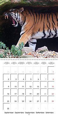 Tiger - The Beautiful Predator (Wall Calendar 2019 300 × 300 mm Square) - Produktdetailbild 9